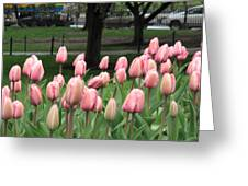 Pink Tulip Patch Greeting Card