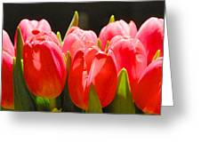 Pink Tulips In A Row Greeting Card