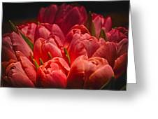 Fucshia Tulips Greeting Card