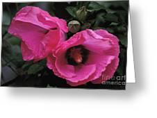 Pink Twins Greeting Card