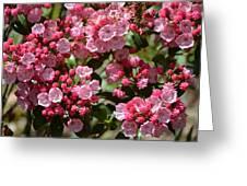 Pink Umbrellas Greeting Card