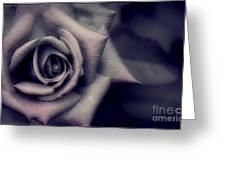 Pink Under Veil Greeting Card