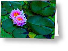 Pink Water Lilies - Lotus Greeting Card