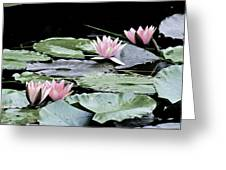Pink Water Lilies Painting Greeting Card
