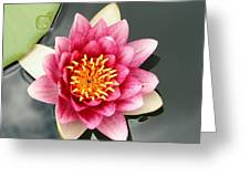 Pink Waterlily And Cloud Reflection Greeting Card