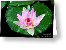 Pink Waterlily Flower Greeting Card