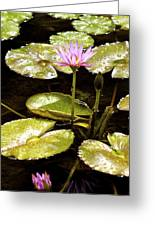 A Waterlily Reflection Greeting Card