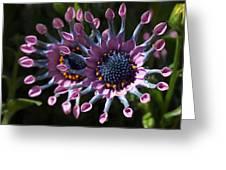 Pink Whirls Greeting Card