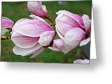 Pink White Wet Raindrops Magnolia Flowers Greeting Card