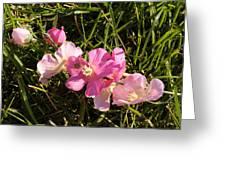 Pink Wildflowers Greeting Card