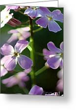 Pink Wildflwer Greeting Card