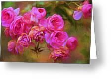 Pink Winter Roses Three Greeting Card