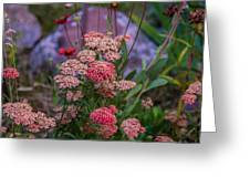 Pink Yarrow Greeting Card
