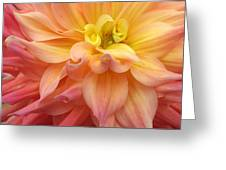 Pink Yellow Centre Greeting Card