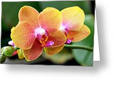 Pink Yellow Orchid Greeting Card