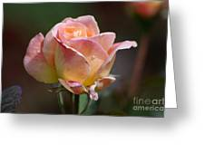 Pink Yellow Rose 01 Greeting Card
