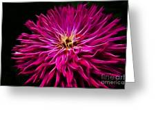 Pink Zinnia Digital Wave Greeting Card
