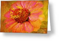 Pink Flower Wall Art Zinnia Floral Fine Art Greeting Card