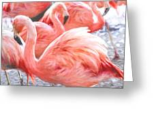 Pinked Flamingos Greeting Card