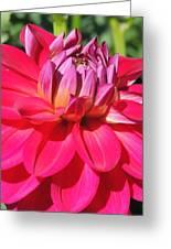 Pinked Greeting Card