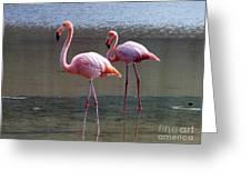 Pinkest Flamingo Greeting Card