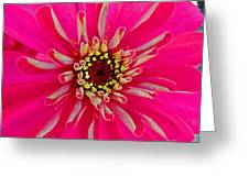 Pinkflow Greeting Card