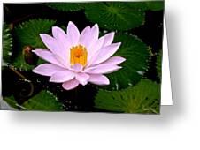 Pinkish Lotus Flower Greeting Card