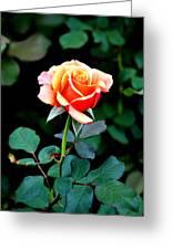 Pinkish Peach  Greeting Card
