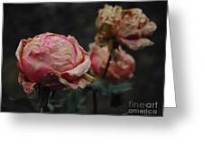 Pink Roses In The First Snow I V Greeting Card