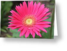 Pinks A Daisy Greeting Card by Sarah E Kohara