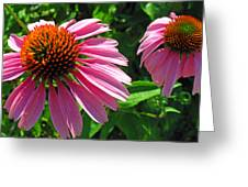 Pinks Greeting Card