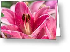 Pinky Swear - Featured 3 Greeting Card