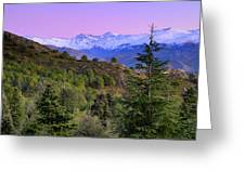Pinsapar At Sierra Nevada Greeting Card