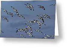 Pintado Petrel Flock Flying Antarctica Greeting Card