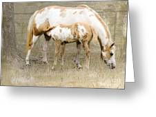 Pinto Mare And Filly Greeting Card