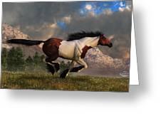 Pinto Mustang Galloping Greeting Card
