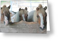 Pinto Party Greeting Card