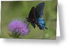 Pipevine Swallowtail Visiting Field Thistle Din158 Greeting Card