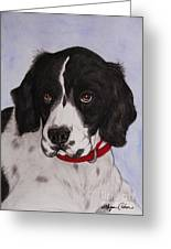 Pippy The Springer Spaniel Greeting Card