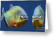Piranha Ready For Lunch Greeting Card