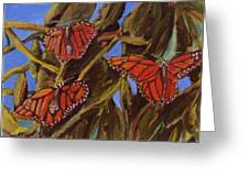 Pismo Monarchs Greeting Card