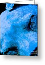 Pit Bull Lullaby// Dream Until Your Dreams Come True Greeting Card by Q's House of Art ArtandFinePhotography