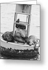 Pit Stop Black And White Greeting Card
