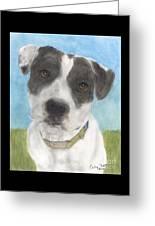 Pitbull Dog Portrait Canine Animal Cathy Peek Greeting Card