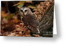 Pixie Saw Whet Owl Watching You Greeting Card