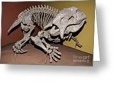 Placerias Fossil Greeting Card