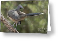 Plain Chachalaca Greeting Card