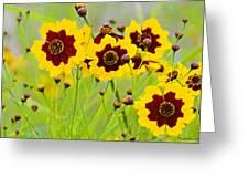 Plains Coreopsis Greeting Card