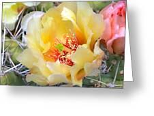 Plains Prickly Pear Flower Greeting Card