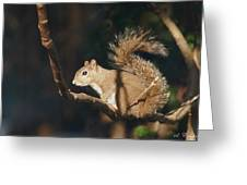 Plans - Gray Squirrel Greeting Card